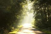 Late sumer forest road in the morning — Stock Photo