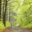 Path in misty spring forest — Stock Photo #4328513