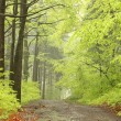 Path in misty spring forest — Stock Photo