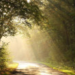 Sunlight falls on the rural road — Stock Photo