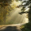 Country road in misty autumnal forest — Stock Photo