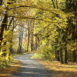Path in autumn forest — Stock Photo #4340482