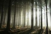 Sunbeams in misty autumn forest — Stock Photo