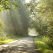 Lane in the forest in the morning — Stock Photo