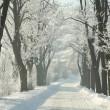 köy yolunda buzlu ağaçları arasında — Stok fotoğraf