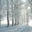 Winter lane backlit by morning sun — Stockfoto
