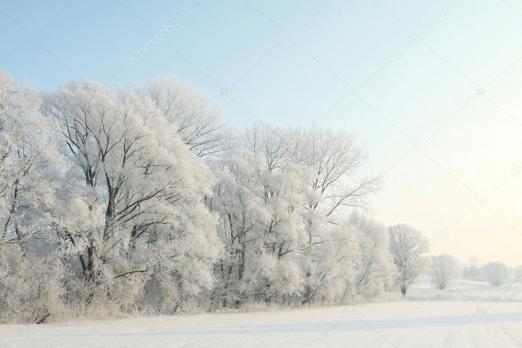 Winter landscape of frosted trees against a blue sky on a sunny morning. — Stock Photo #4513209