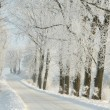 Winter rural road among frosted trees — Stok fotoğraf
