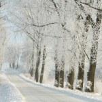 Kış buzlu ağaçları arasında kırsal yol — Stok fotoğraf