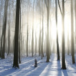 Foggy winter forest on a sunny morning — Stock Photo