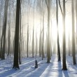 Foggy winter forest on a sunny morning — Stock Photo #4567223