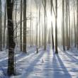 mistige winter bos op een zonnige ochtend — Stockfoto