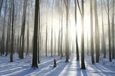 Foggy winter forest on a sunny morning — Zdjęcie stockowe