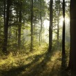 Spring deciduous forest at dawn - Stock Photo