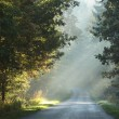 Rural way in a misty autumn forest — Stock Photo #4579371