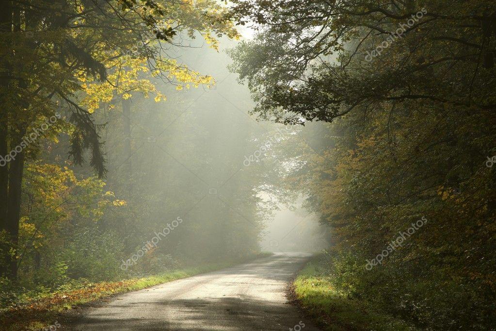 Фотообои Rural road in a foggy autumn forest at dawn