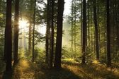 Landscape of deciduous forest at dawn — Stock Photo