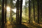 黎明时分落叶森林景观 — 图库照片