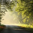 Country road in autumn forest at dawn — Stock Photo #4738033