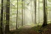 Forest trail on a misty autumn morning — Stock Photo