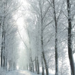 Winter country road on a frosty morning — Stock Photo
