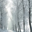 Winter country road on a frosty morning — Stok fotoğraf