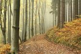 Mountain trail in misty autumn forest — Foto Stock