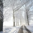 Winter lane on a sunny morning — Stock Photo