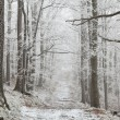 Forest trail on a winter morning — Stock Photo
