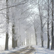 Winter rural road in the morning — Stockfoto