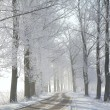 Winter rural road in the morning — Stok fotoğraf