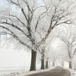 Winter lane among the trees covered in frost — Stock Photo #4991387