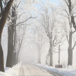 Misty country road among frosted trees — Stockfoto