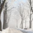 estrada entre árvores foscas enevoado — Foto Stock