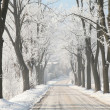 Winter lane in the countryside — Stock Photo