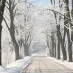 kırsal kış lane — Stok fotoğraf