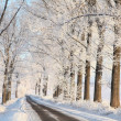 Winter Lane im Morgengrauen — Stockfoto