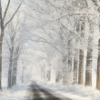 Winter country road among frosted trees — Stock fotografie