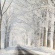 Winter country road among frosted trees - Stock Photo