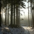 Stock Photo: Winter coniferous forest at dusk