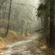 Stock Photo: Misty forest trail