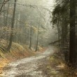 Misty forest trail — Stock Photo
