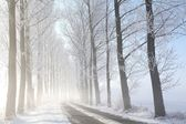 Winter rural road on a misty morning — Stock Photo