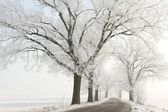 Winter lane among the trees covered in frost — Stock Photo