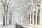Winter country road among frosted trees — Stock Photo