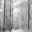 Landscape of winter forest on a frosty morning — Stock Photo