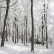 Winter forest in the sunshine — Stock Photo
