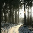 Winter coniferous forest at dusk — Stock Photo