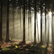 Sunrise in misty autumn forest — Stock Photo #5234198