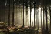 Sunrise in misty autumn forest — Stock fotografie